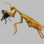 Mantis religiosa_ parece que reza decapita su presa. 2004. Tela metálica. 180 x 230 x 70 cm.