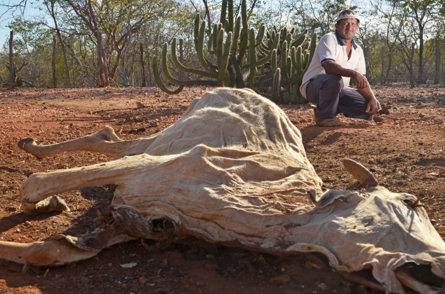 Figura 1 - Cadáver ressecado do boi | Foto: Douglas Magno, Rema Brasil.