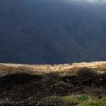 0. Estufas, Ilha de El Hierro, Canarias, Espanha. Julho de 2015