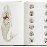 copy-of-livro