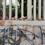 Despojos urbanos 02