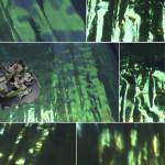 imagem 6 - mar floresta e ilha
