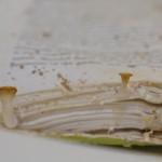04-mushrooms-on-book
