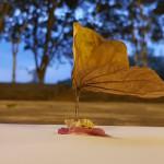 Edicc-Arte-Ciencia-Tecnologia-2018-Erica-Araium-13