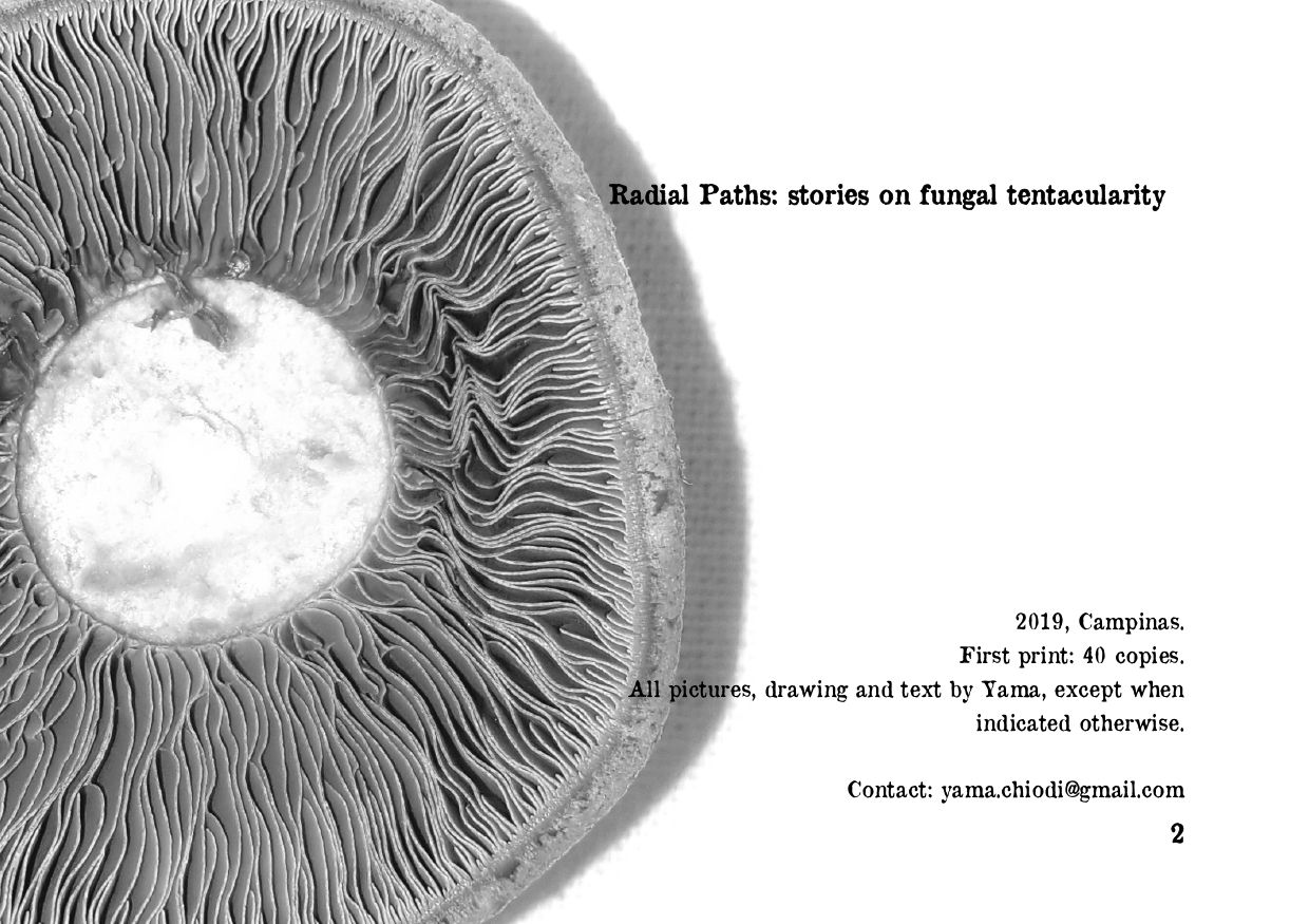 RADIAL PATHS 06-08_page-0002