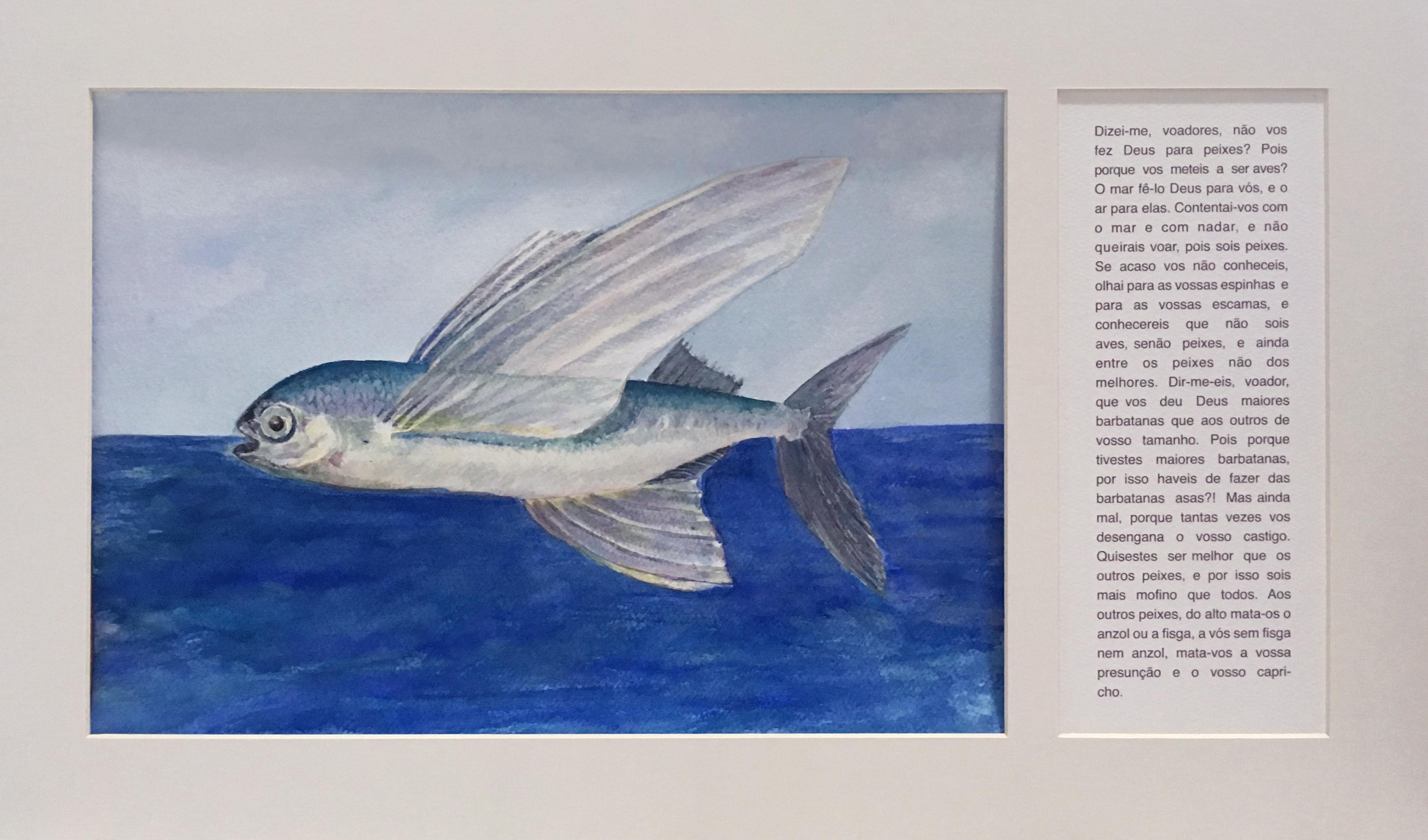 peixe voador (1)