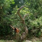 2. Arborecer